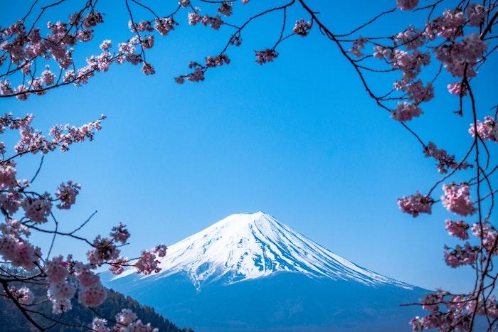 Fond d'écran printemps, paysage de printemps, image jolie fleurie, le mont Fuji et arbres fleuries, japonais cerisier