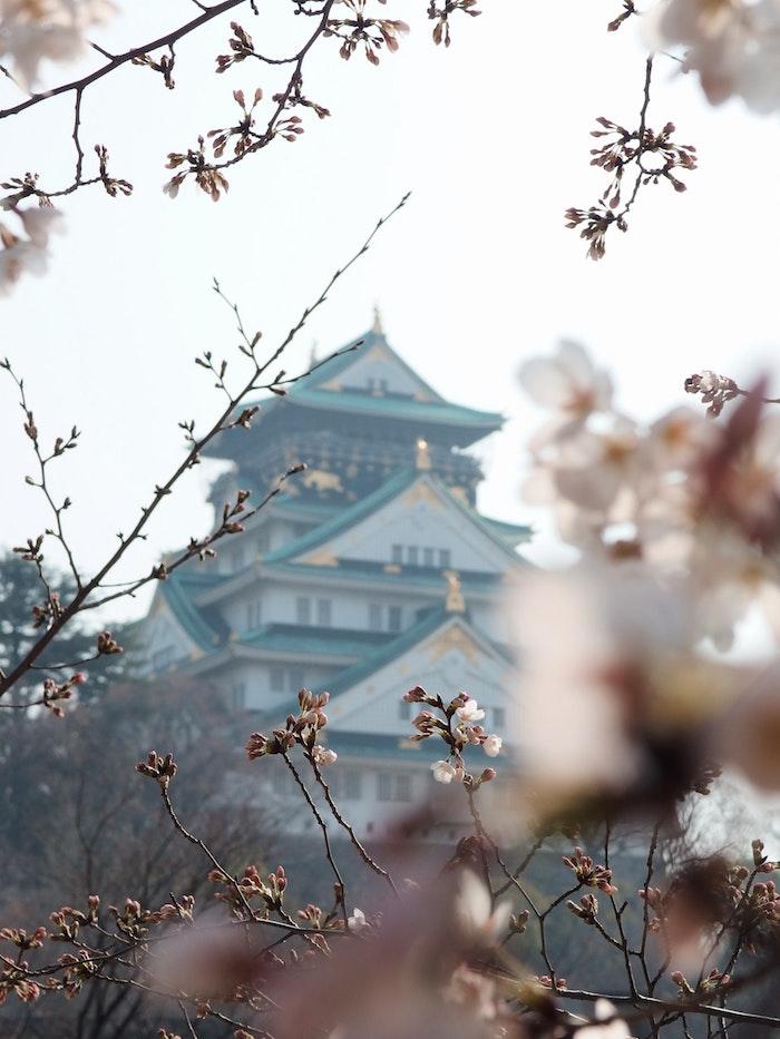 Image printemps japonais, pagode To paysage de printemps, photographie professionnelle arbre cerise et pagode japonaise en arrière plan