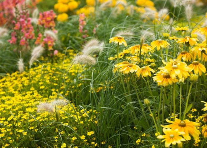 exemples massif vivaces et herbes, fleurs à floraison jaune, fleurs sèches, fleurs roses