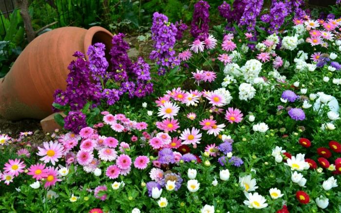 grand pot en agile et massif de paquerettes de couleurs diverses, jardin vert avec fleurs de printemps et d'été