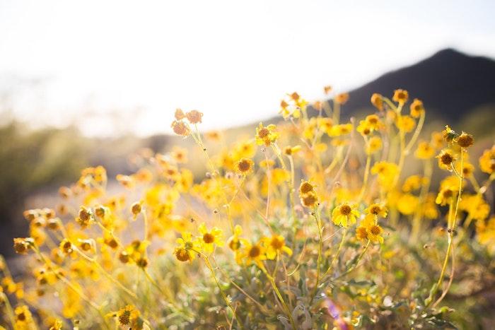 FLeyrs d'été et printemps, fond ecran fleur, fond d'écran printemps, arrière plan nature, champetre paysage photo