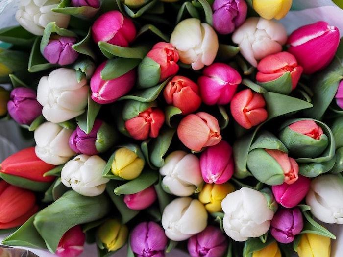 Bouquet de tulipes différents couleurs, photo joyeuses paques, humour image de pâques coloré, representation visuelle