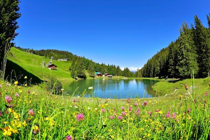 Paysage de printemps, paysage champêtre fond d'écran, champ fleurie avec un lac au mileu et petits maisons chalets