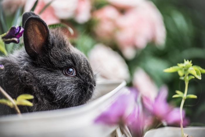 Belle image de lapin dans un pot de fleurs pour dire joyeuses fetes de paques, carte joyeuses pâques avec lapin gris