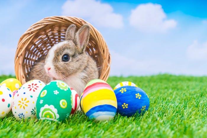 Le lapin et les oeufs colorés, photo de paques, carte joyeuses pâques, image la beauté de printemps