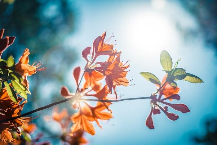 Photo printemps, paysage fantastique fond d'ecran, belle fleur en branche, fruit à suivre