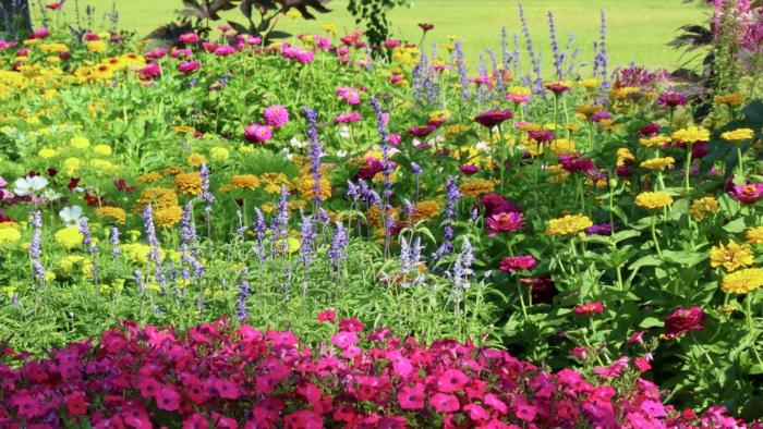 jardin vert avec massifs de fleurs, plusieurs espèces plantées l'une près de l'autre