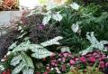 Comment créer un joli massif de fleurs pour décorer le jardin ou l'espace devant la maison