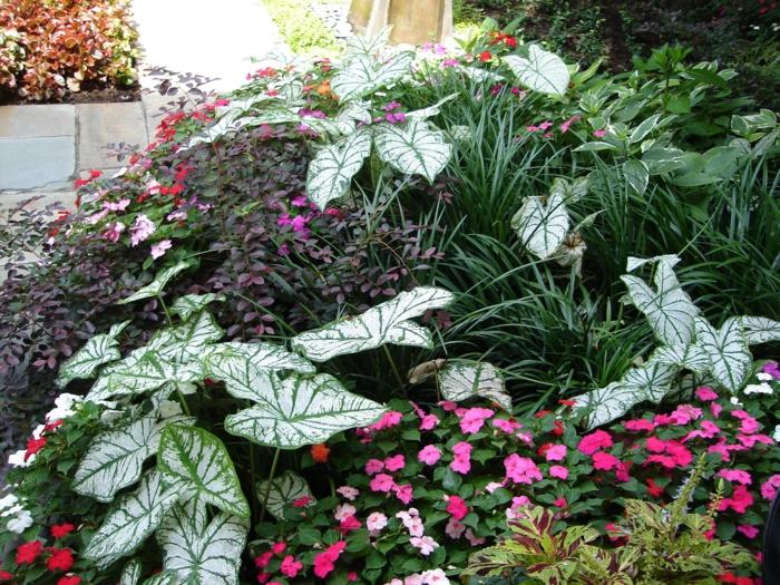 parterre de fleurs divers, mêlées d'herbes vertes, massif fleurs près de l'allée devant la maison