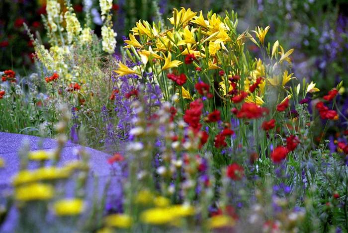 créer un massif de fleurs vivaces, fleurs multicolores à floraison estivale, exemples massifs vivaces