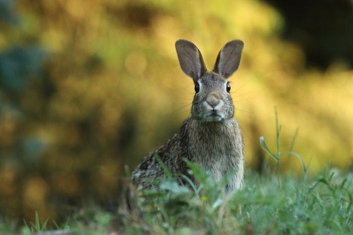 Image animal adorable, lapin dans un champ vert, image de paques gratuit joyeuses paques images, printemps photographie