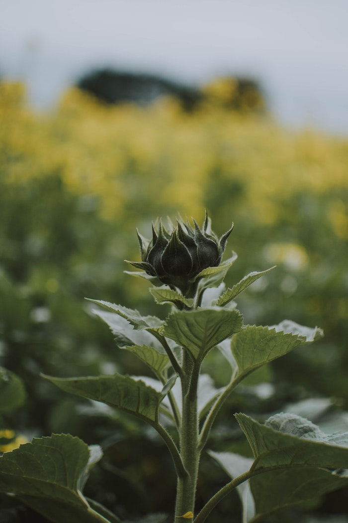 Fond ecran printemps, paysage de printemps, fleurie naissance verdure et beauté dans la nature, paysage photographie