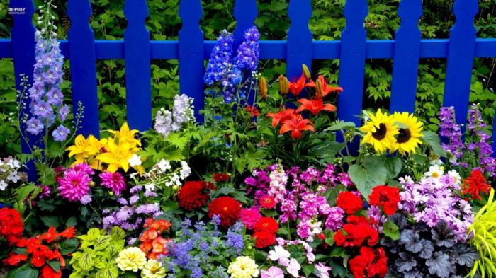 fleurs de printemps et d'été en couleurs éclatantes, tournesol, oeillets, lys orange, chrysanthèmes