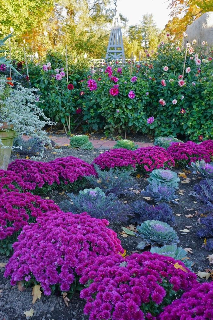 grand jardin avec parterres de fleurs, exemples massifs vivaces, roses et chrysanthèmes, massif fleuri