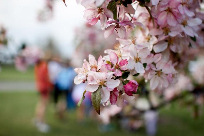 Image de printemps, arbre fleurie en temps de la chasse d'oeufs, image de paques gratuit, belles images de paques