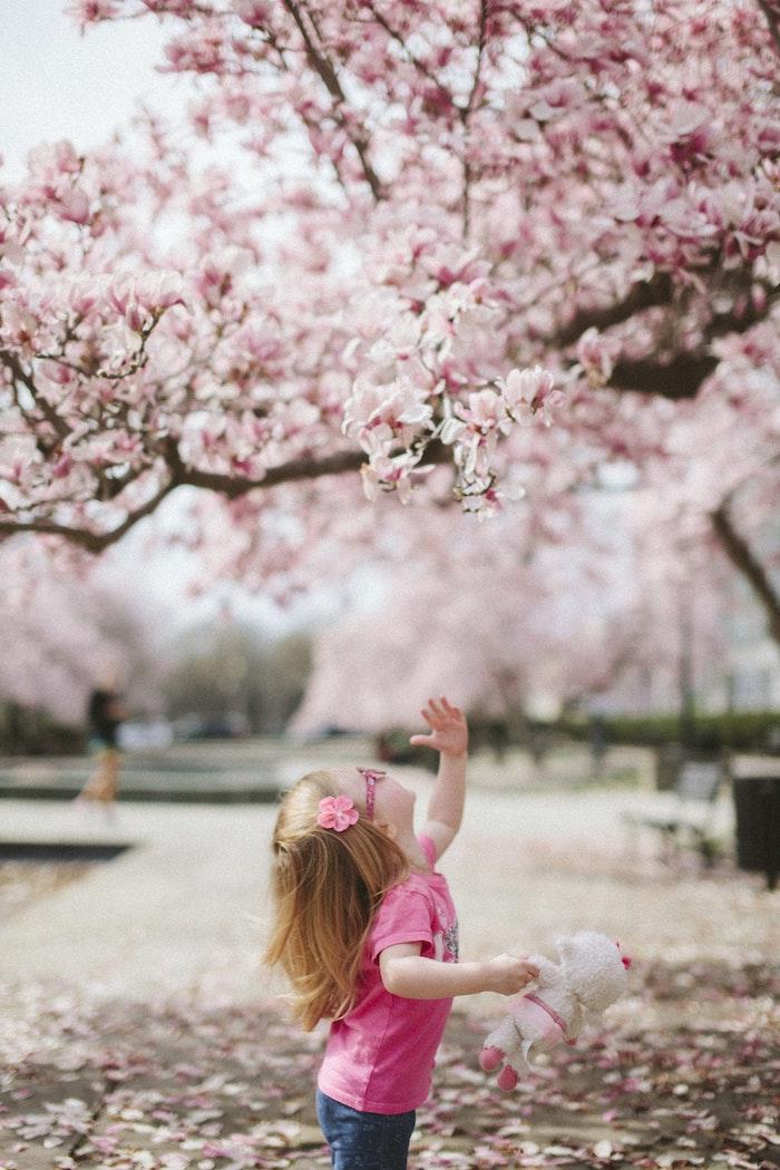 Petit fille heureuse de découvrir le printemps, lunettes, t-shirt rose et jean, main vers l'arbre fleurie, arbre japonais cerise fleurie