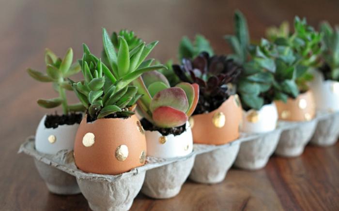 carton à oeufs rempli de pots de fleur mignons créés avec des oeufs, succulentes pnatées
