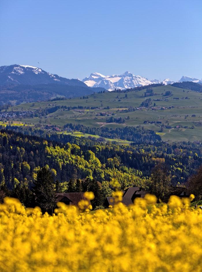 Montagne, champ jaune et champ vert, photo printemps, fond d'écran printemps, paysages de campagne au printemps