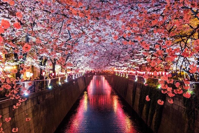 RIviere japonais avec arbres fleuries autour, fond ecran nature, fond d'écran printemps, image printanière