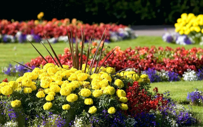 fleurs plantées en groupes, massifs fleuris multicolores, pelouse, jardin avec des parterres fleuris