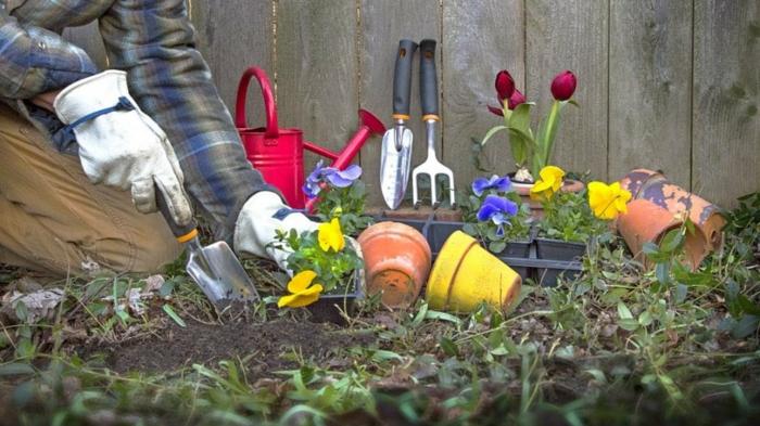 plantes de jardin en massifs, créer une bordure fleurie, petits pots de fleurs colorés, tulipes burgundy