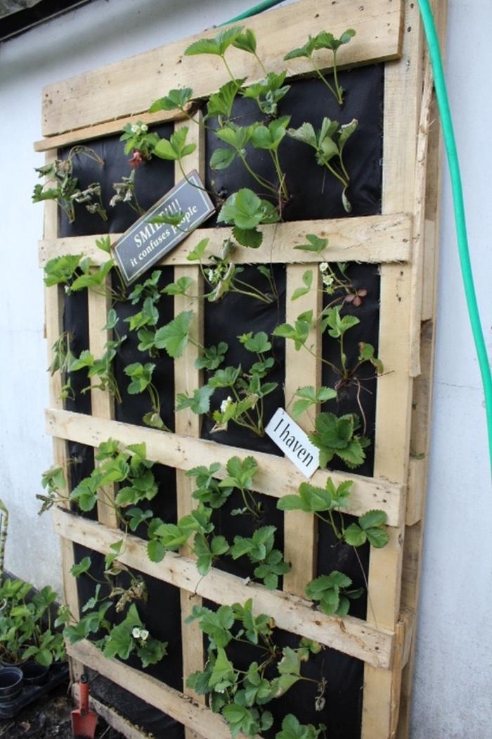 une plantation de fraisiers à la verticale dans une jardinière en palette fixée au mur
