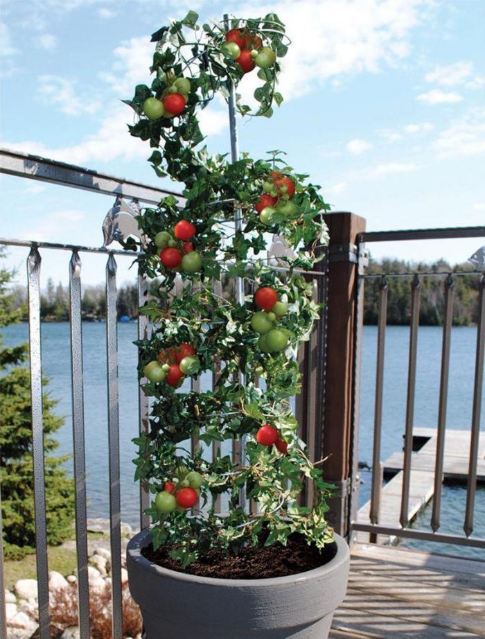 faire pousser des tomates en pot, comment aménager un petit potager sur balcon ou terrasse