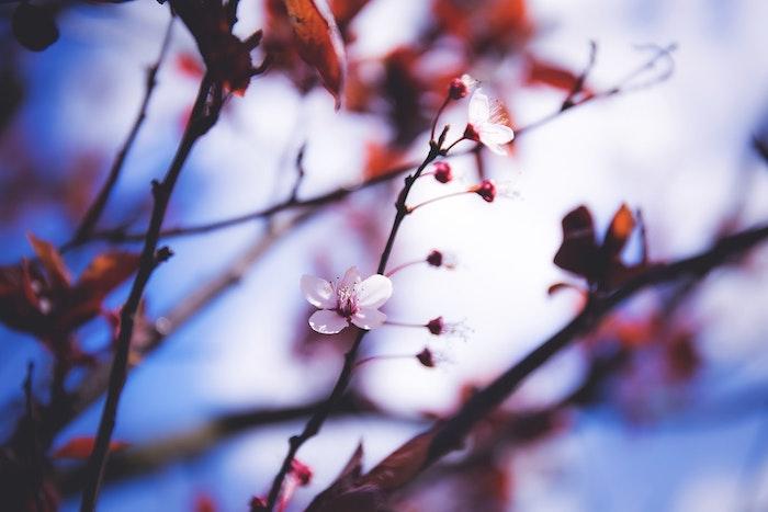 Arbre fleurie au printemps, fond ecran paysage, fond ecran fleur, photo coloré, la beauté de la nature