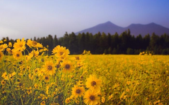 Montagne et champ fleurie, paysage fantastique fond d'ecran cool, fond ecran fleur, chouette idée d'image à utiliser
