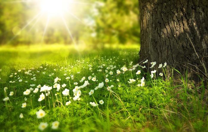 Champ veer fleurie pour fond ecran nature, paysage fantastique fond d'ecran, soleil de printemps