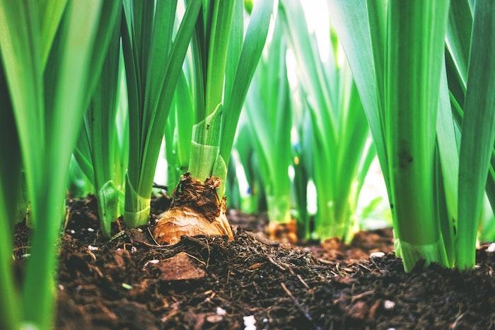 Joyeuses paques abec un photo macro printanière, tubercule images belle image de pâques fond d écran printemps