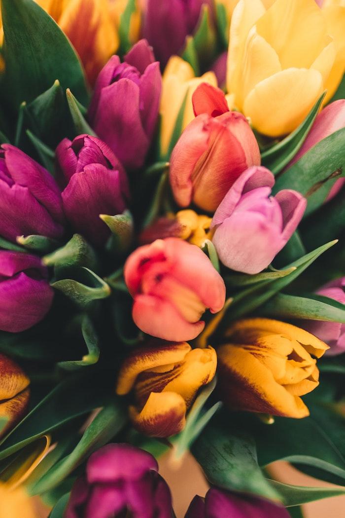 Bouquet de tulips colorés, fond d'écran paysage printemps, paysage japonais fond d'écran, belle photo à utiliser comme fond d'écran pour son téléphone