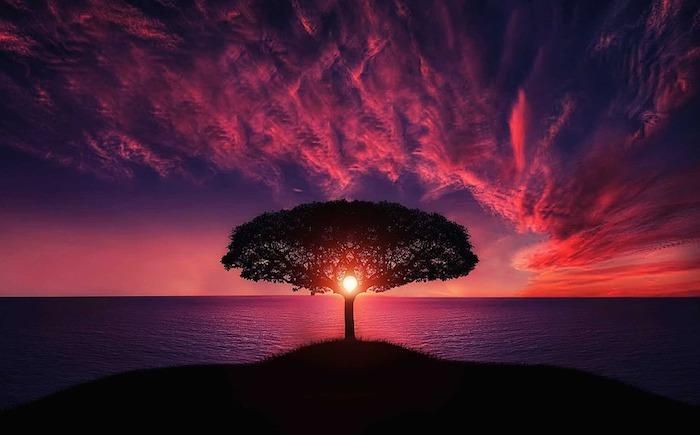 L'arbre de la vie, coucher de soleil océan paysage japonais arbre beau, fond d'écran coucher de soleil au bord de la mer, fond ecran nature, belle photographie