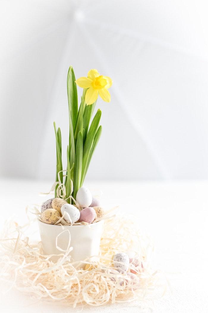Narcis dans un pot décoré d'oeufs minatures colorés, carte joyeuses pâques, belle image joyeuses paques en bonne humeur