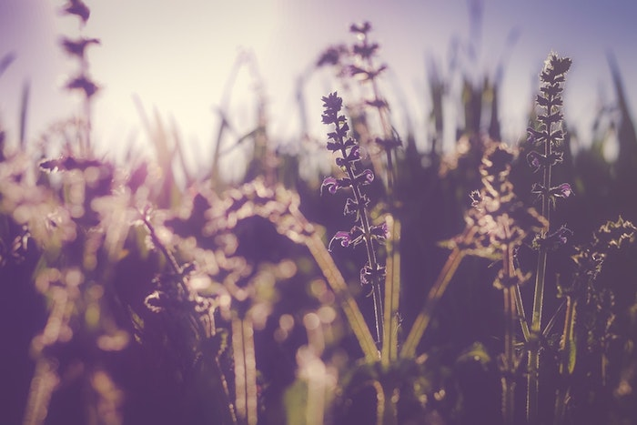 Image de printemps paysage, fleurs printemps pour fond d'écran un peu nostalgique à cause des couleurs plus foncés, photographie professionnelle
