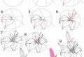 Le dessin de fleur – astuces et idées pour apprendre comment dessiner une fleur
