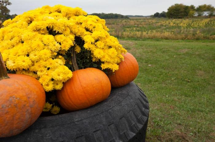 aménager son jardin, citrouilles oranges, fleurs d'automne jaunes, paysage de campagne, decoration exterieur
