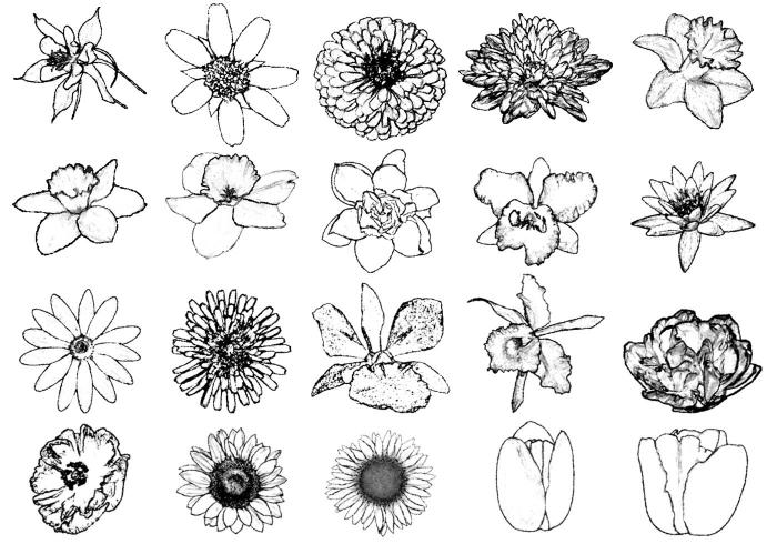 Fleurs différentes noir et blanc fleur de lys dessin simple dessin fleur noir et blanc dessin à reproduire