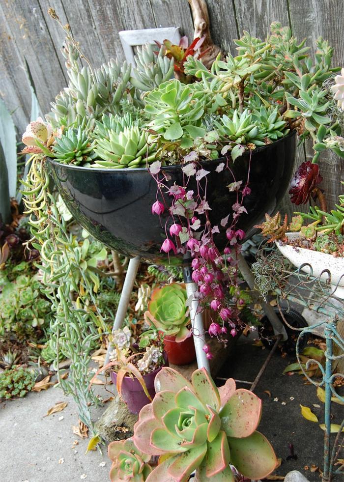 bac de jardin barbecue, succulentes et plantes grimpantes, cloison en bois, decor jardin rustique