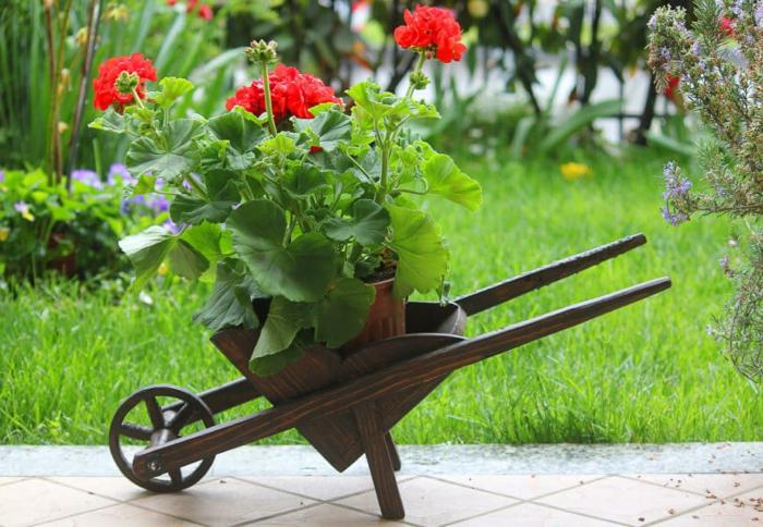 brouette en bois, fleurs plantées, herbe fraîche, idee deco jardin avec objets récupérés