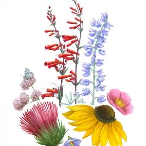 Le dessin de fleur - astuces et idées pour apprendre comment dessiner une fleur