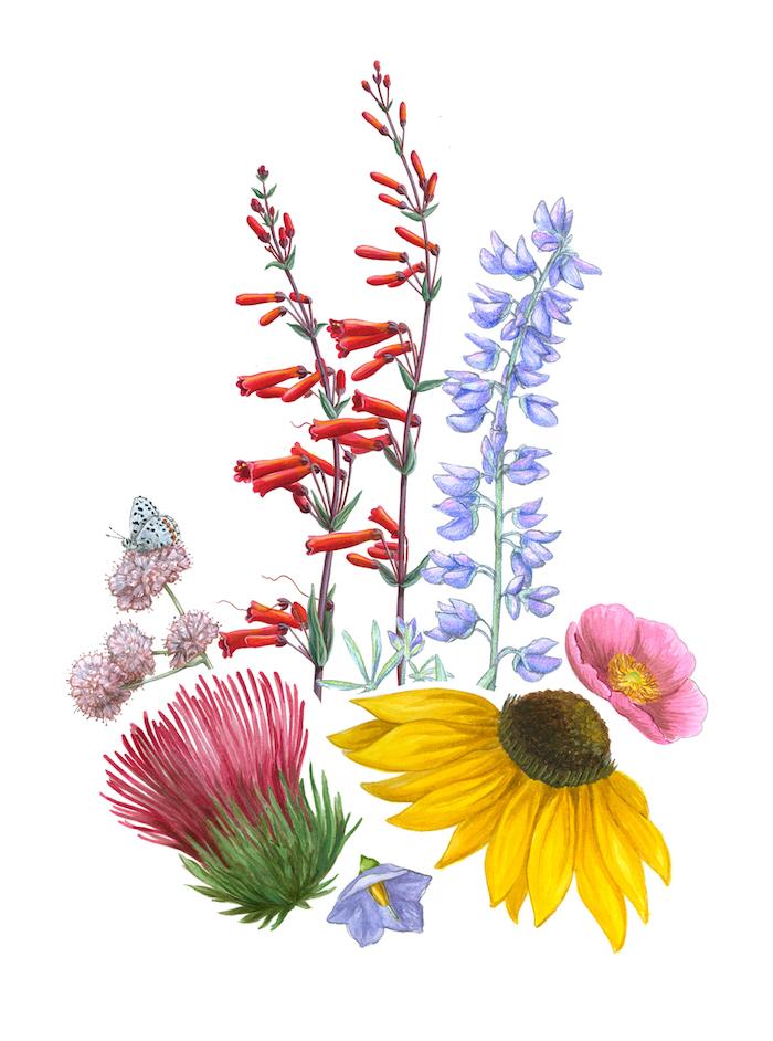 Coloré dessin de fleurs sauvages, apprendre a dessiner facilement, comment dessiner une fleur réaliste