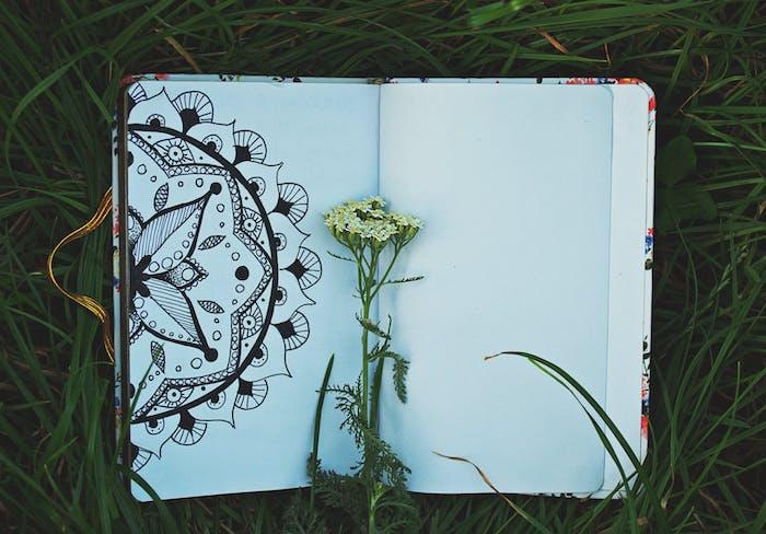 Champêtre fleur et cahier de croquis, fleur mandala, fleur de printemps dessin de rose dessiner pour débutants