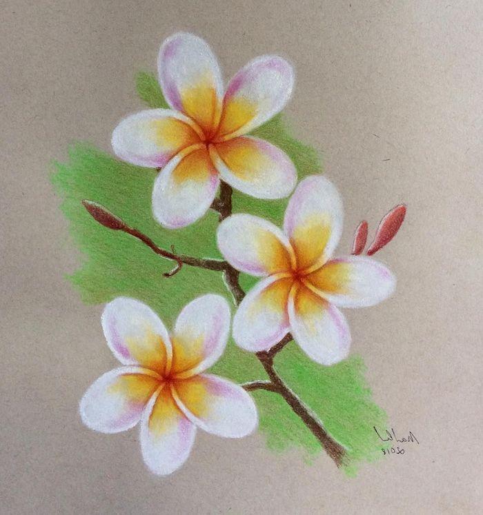 Branche fleurie coloré, dessin crayon couleur, dessin de fleur sur branche, dessin facile a faire etape par etape