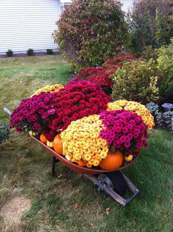 brouette remplie de pots de fleurs et de citrouilles, idee deco jardin colorée rustique