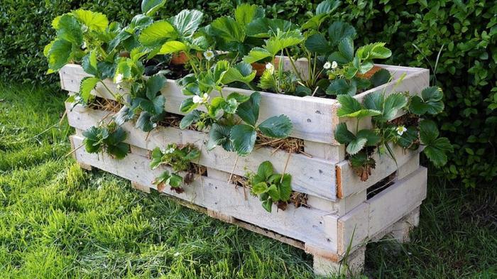 coffre à fleurs en palettes peintes blanches, bac à fleurs posé dans le jardin, fraises plantées