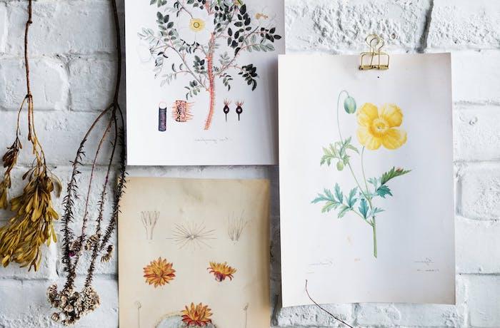le dessin de fleur astuces et id es pour apprendre. Black Bedroom Furniture Sets. Home Design Ideas