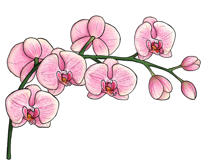 Branche orchidée, dessin fleur noir et blanc dessin facile a reproduire par etape