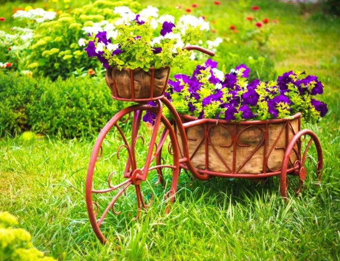 vélo trois roues, pelouse verte, pétunias plantés et mis dans les corbeilles, parterres de fleurs