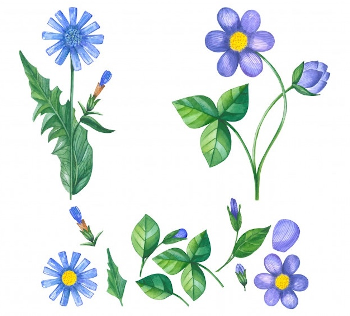 1001 Images De Dessin De Fleur Pour Apprendre à Dessiner